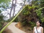 Strange vegetations