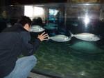 Day 9 - Started at the Auckland aquarium